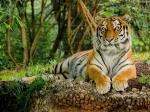 Quiz On National Animal Of India : ರಾಷ್ಟ್ರೀಯ ಪ್ರಾಣಿ ಹುಲಿ ಬಗ್ಗೆ ನಿಮಗೊಂದಿಷ್ಟು ಪ್ರಶ್ನೆಗಳು