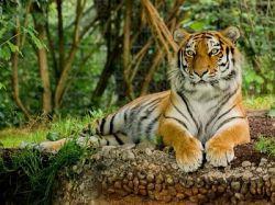 International Tiger Day Quiz On National Animal Of India In Kannada