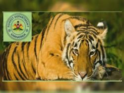 Forest Officer Post In Karnataka Forest Department