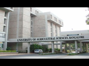 Bengaluru Gkvk Ranked First Among The South Indian Agricultural Universities