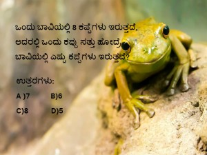 Solve This Frog Questions