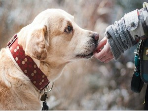 Best Jobs For People Who Love Animals